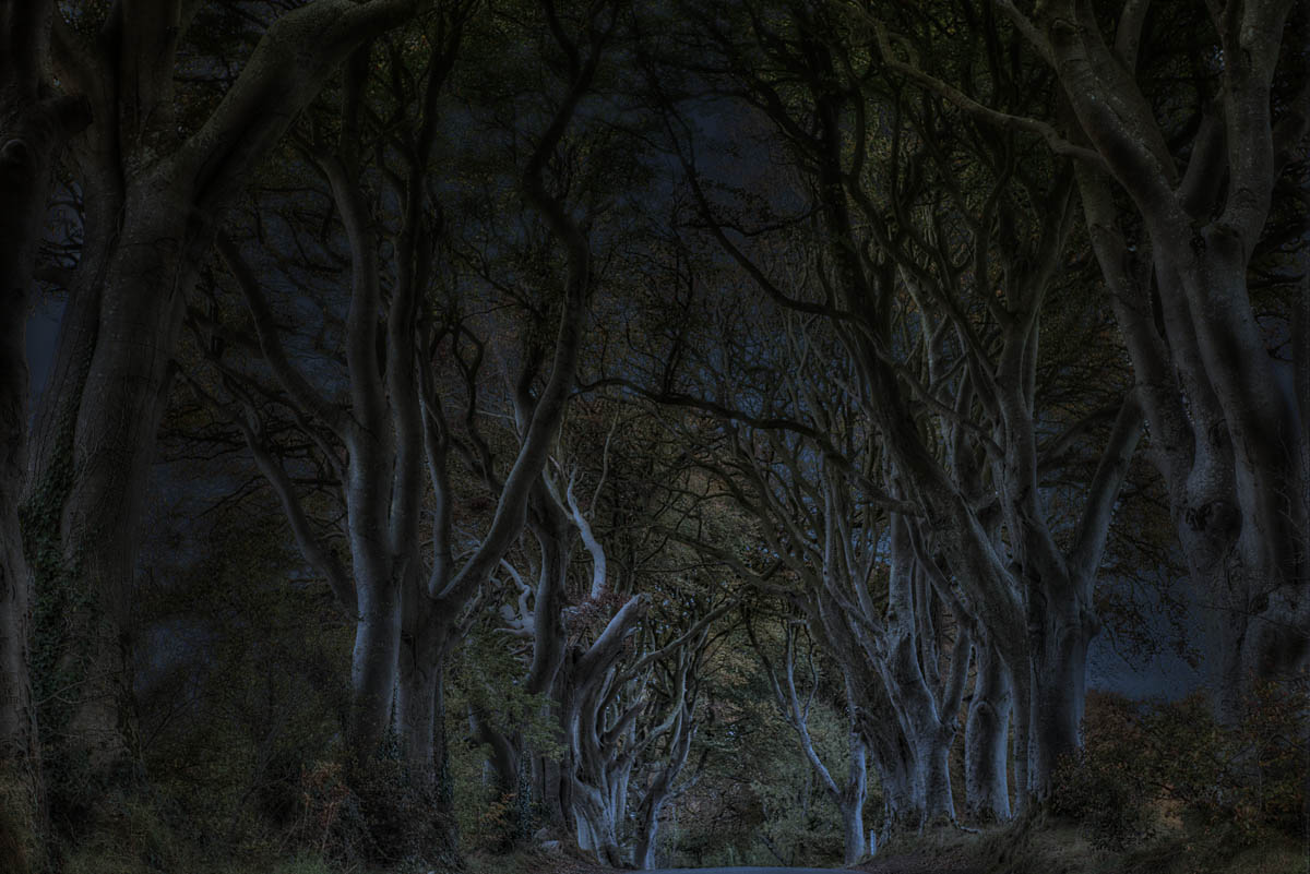Dark Hedges bei Dunkelheit