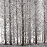 20071229_winter_forest_1