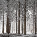 20071229_winter_forest_2
